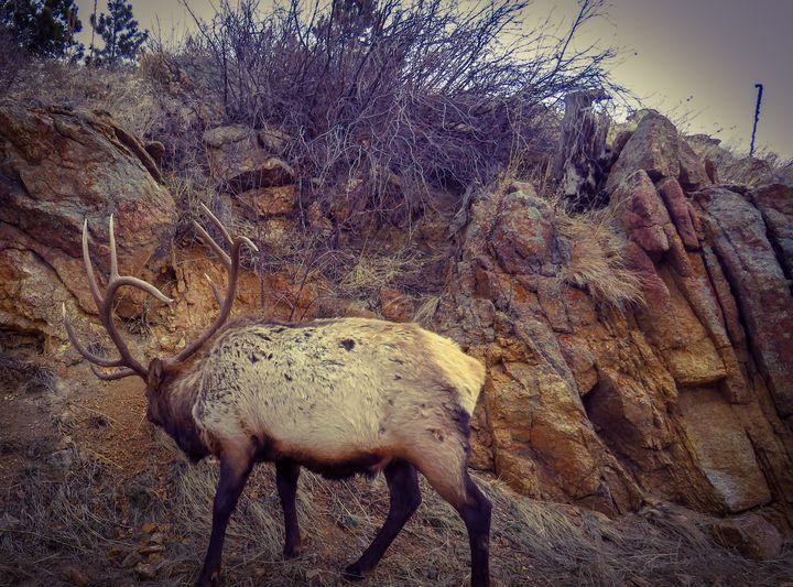 A Monster Bull - Chad Vidas Outdoors