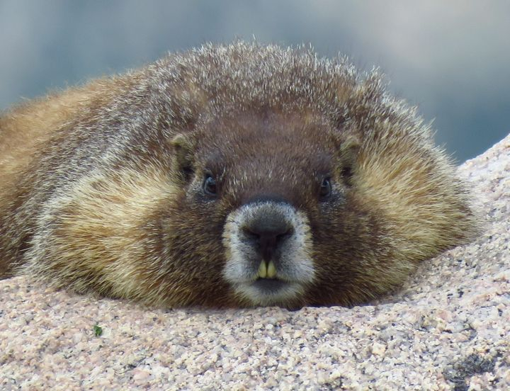 Marmot High - Chad Vidas Outdoors