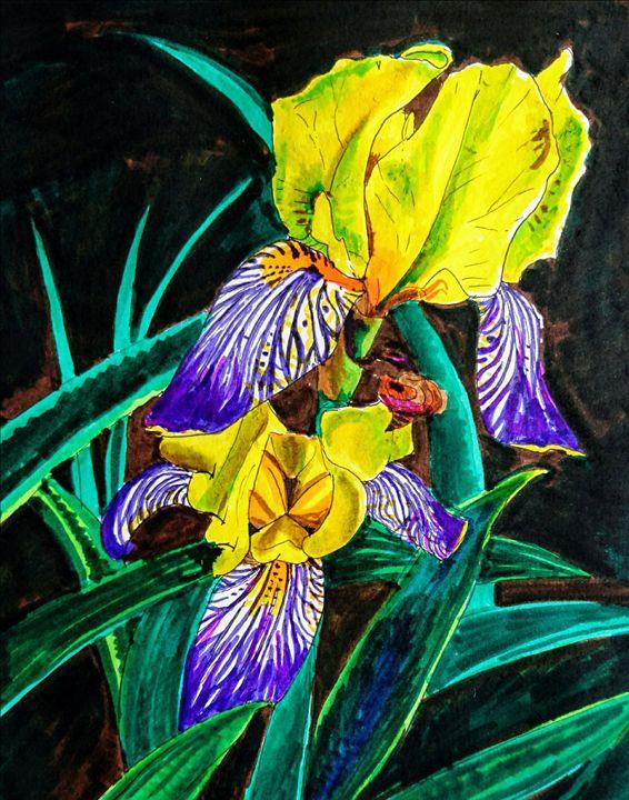 Oslo Iris flowers - Windleland