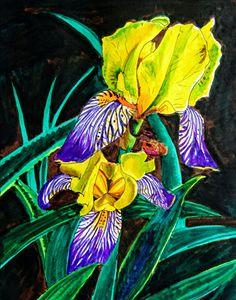 Oslo Iris flowers