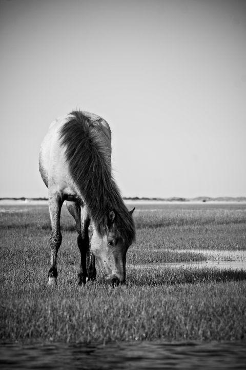 Wild Banker Horse on the Flats - Bob Decker