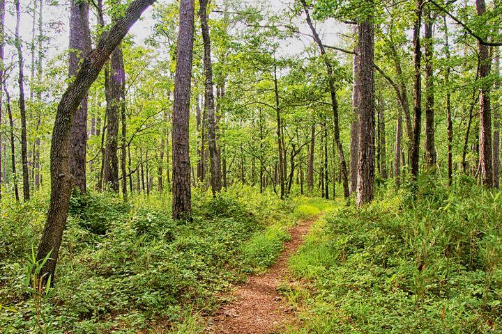 Along the Neusiok Trail - Bob Decker
