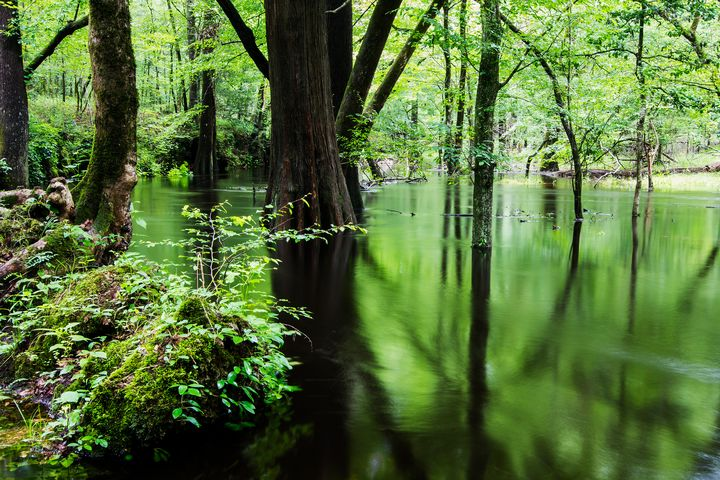 Island Creek Trail Croatan Forest NC - Bob Decker