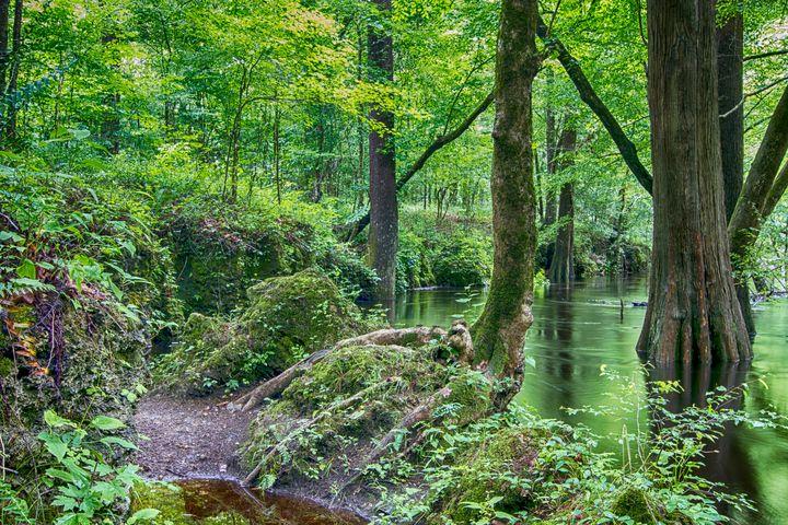 View of Island Creek in the Croatan - Bob Decker