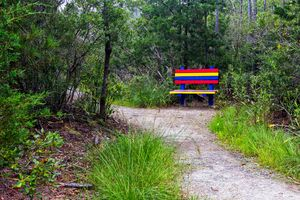 Colorful Park Bench on the Trail