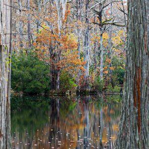 Autumn Foliage at Brock's Millpond