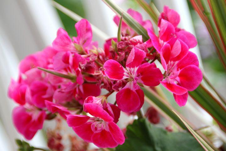 belles fleurs - BJames Photography