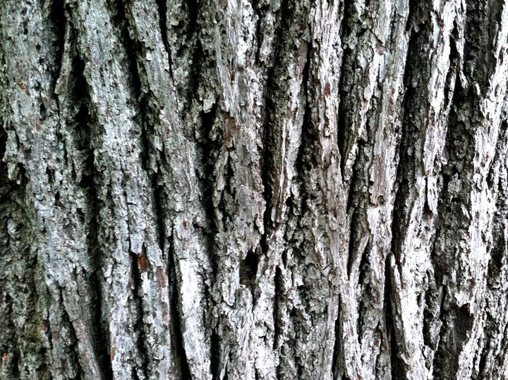 Old Tree Bark - BJames Photography
