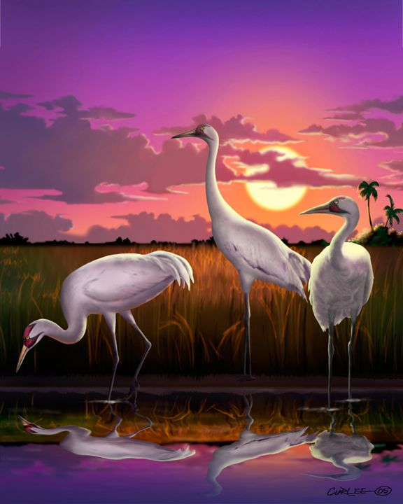 Whooping Cranes Tropical Sunset - Walt Curlee Fine Art & Prints
