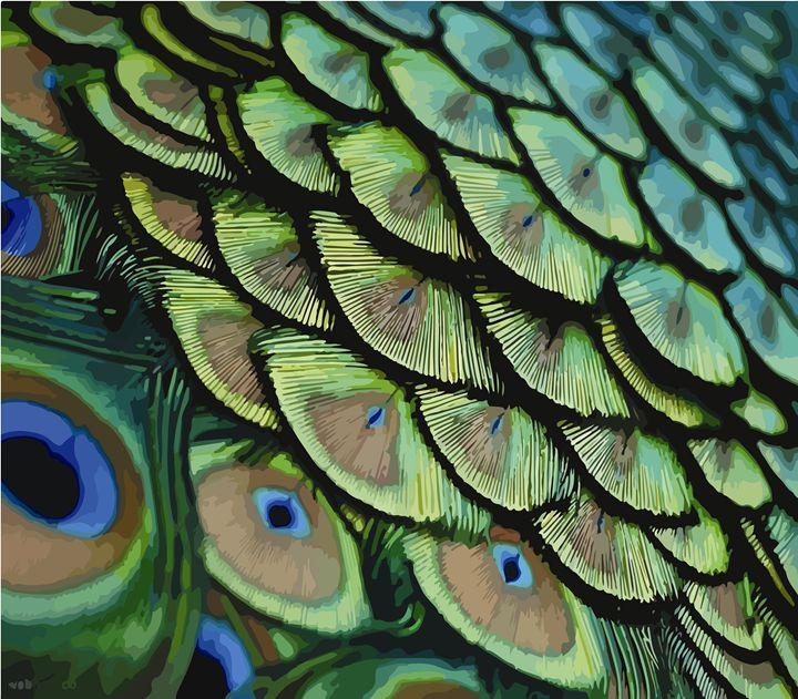 Feather peacock - ARIES DƯƠNG