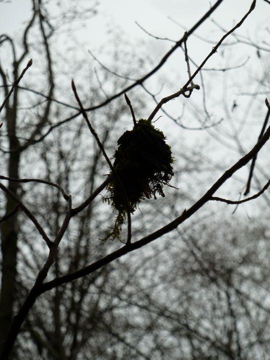 Hanging Moss - Alexandra Malouf