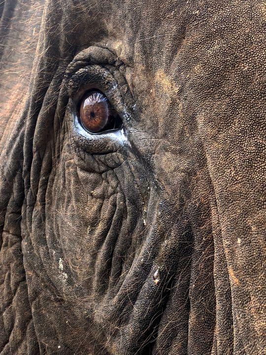Elephant Tears - Alexandra Malouf