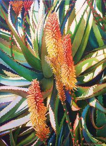 Savila en Flor-Aloe y Vera-55 x 75cm - Robert C. Murray II