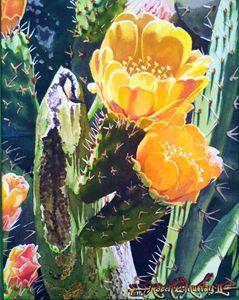Cactus Rose Flowering