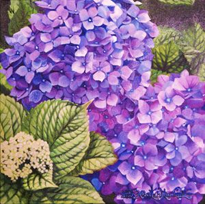 Hortensias - Robert C. Murray II