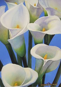 Calas-Lillies 35 x 50 cm Watercolo - Robert C. Murray II