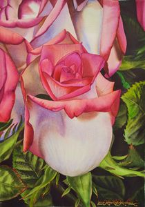 Blushing Pink and White Roses - Robert C. Murray II