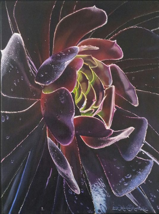 Black Rock Rose-45 x 60 cm - Robert C. Murray II