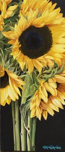 Sunflowers-Girasol - Robert C. Murray II