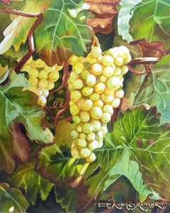 White Grapes on Vine - Robert C. Murray II