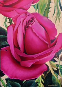 Fuchsia Roses - Robert C. Murray II