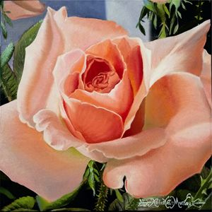 Blush Pink Rose-30 x 30 cm - Robert C. Murray II
