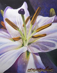 Lily (Perlascente) - Robert C. Murray II
