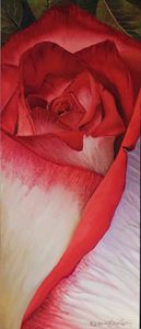 Cranberry and white Rose - Robert C. Murray II