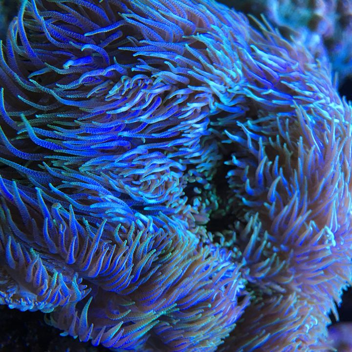 Saltwater Coral - Sheaffer Art Gallery