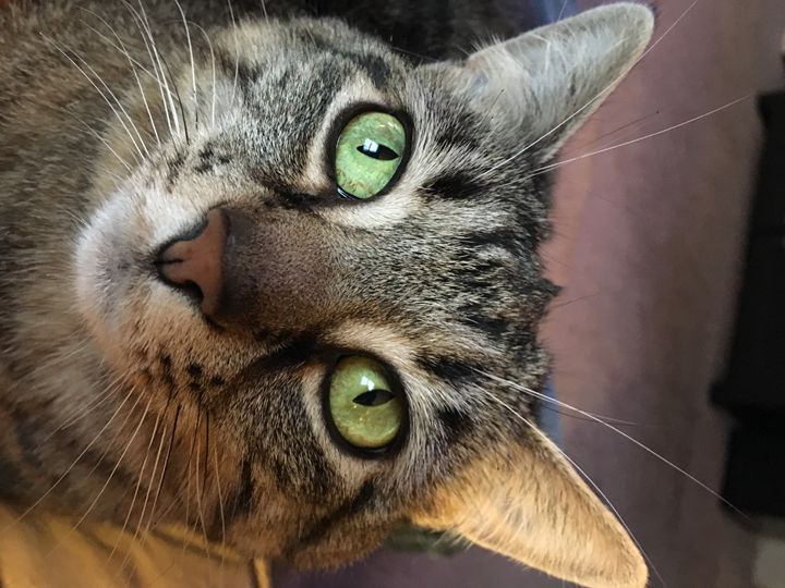 Cat Eyes - Sheaffer Art Gallery