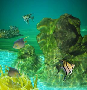 Fish Tank Collage