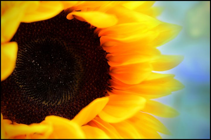 Sunflower - Blessed by Gaia