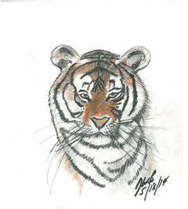 Majestic Bengal Tiger Sketch