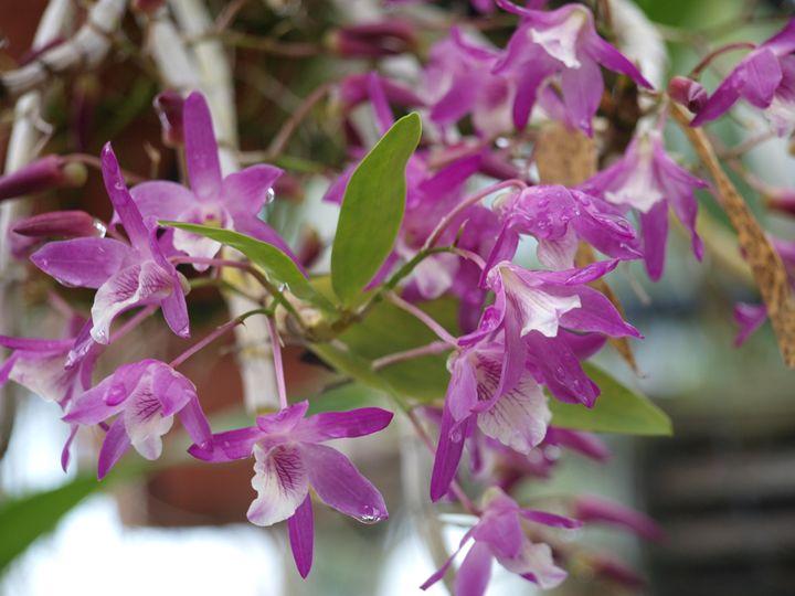 Purple Flowers Photo - LJM Memories