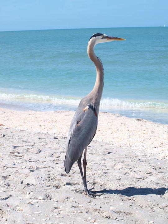 Large Bird on Beach - LJM Memories