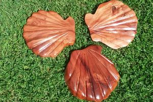 Old Growth Hand Carved Sea Shells