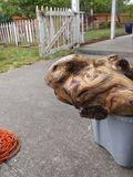 Turtle weathervane