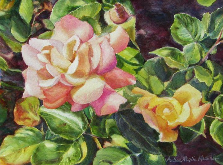 California Peace Rose - Andrea Maglio-Macullar