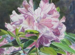 Spring Rhododendron - Andrea Maglio-Macullar