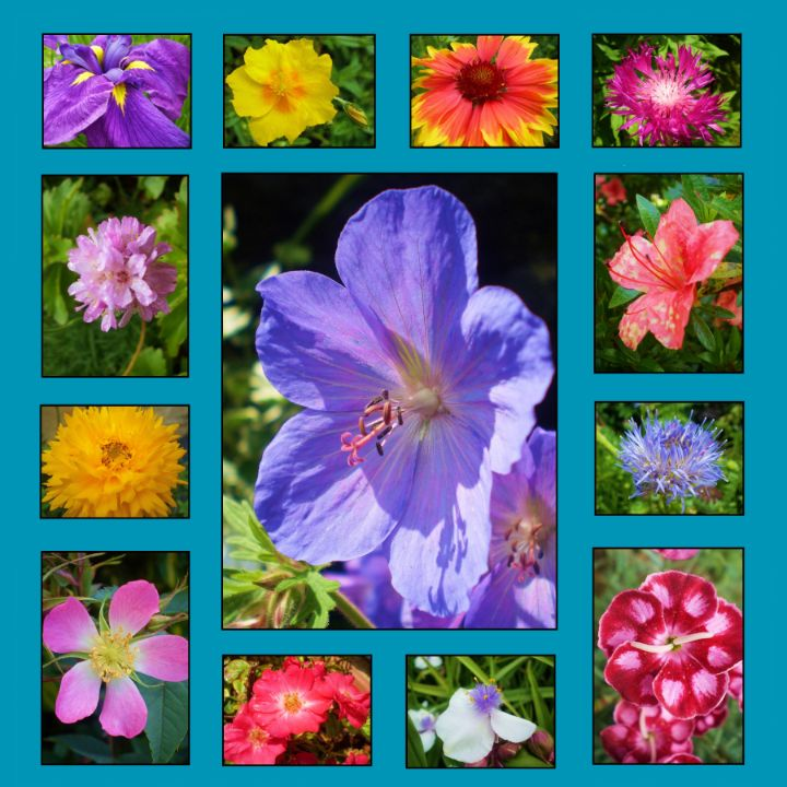 Flower Group 3 - Ian G