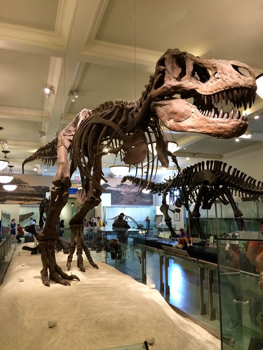 The giant T-Rex - Wezalen's gallery