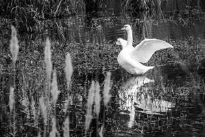 Water Dancer - Greg N Smith PhotoArt