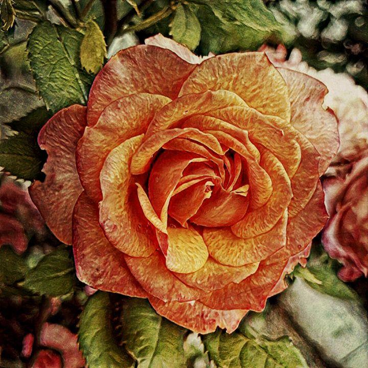 Rose - Shadow-artist