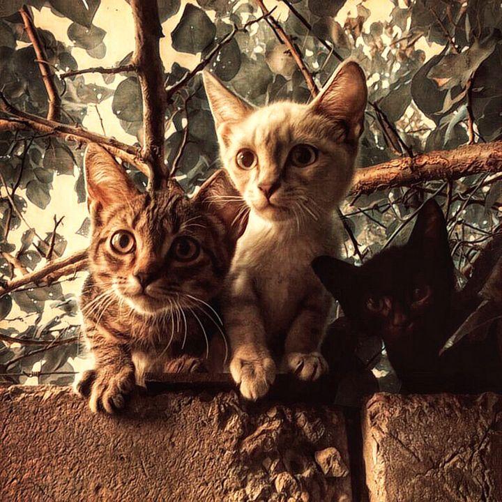 Trio wild kittens - Shadow-artist