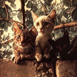 Trio wild kittens