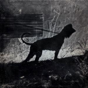 Shadow dog - Shadow-artist