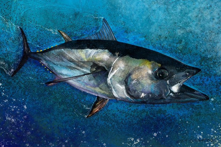 The Bluefin Tuna - FishWearDesigns