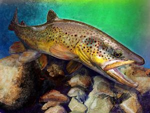 The Wild Brown Trout
