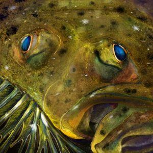 The Sumer Flounder