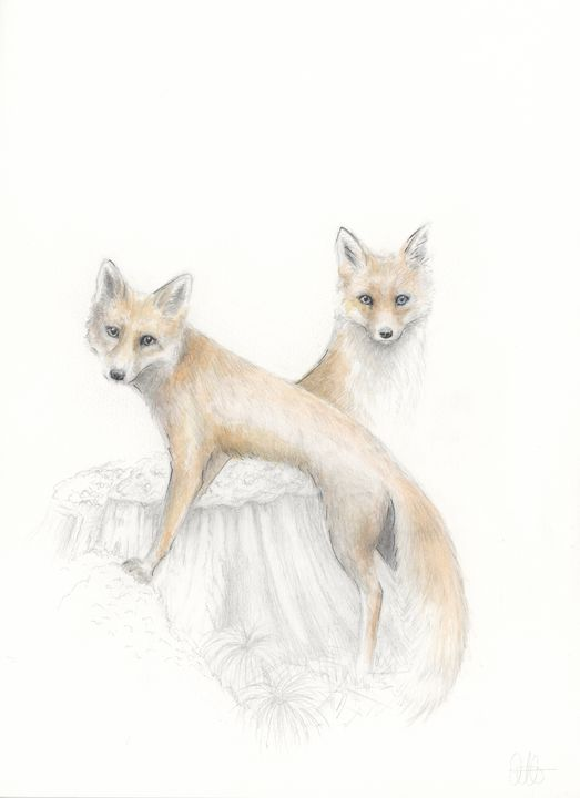 Two Red Fox - Quilla